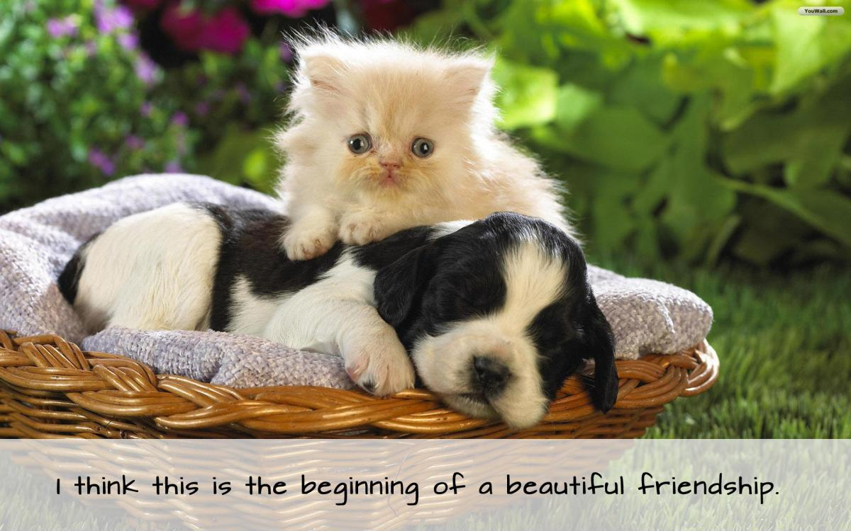 Beautiful Quotes About Friendship Beauteous I Think This Is The Beginning Of A Beautiful Friendship  Picture