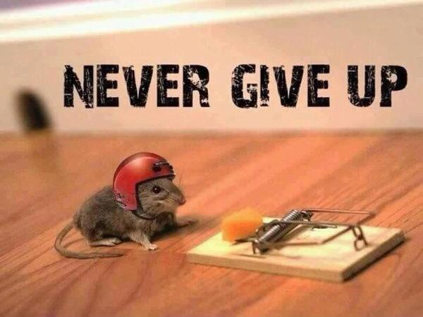 Never give up Picture Quote #1