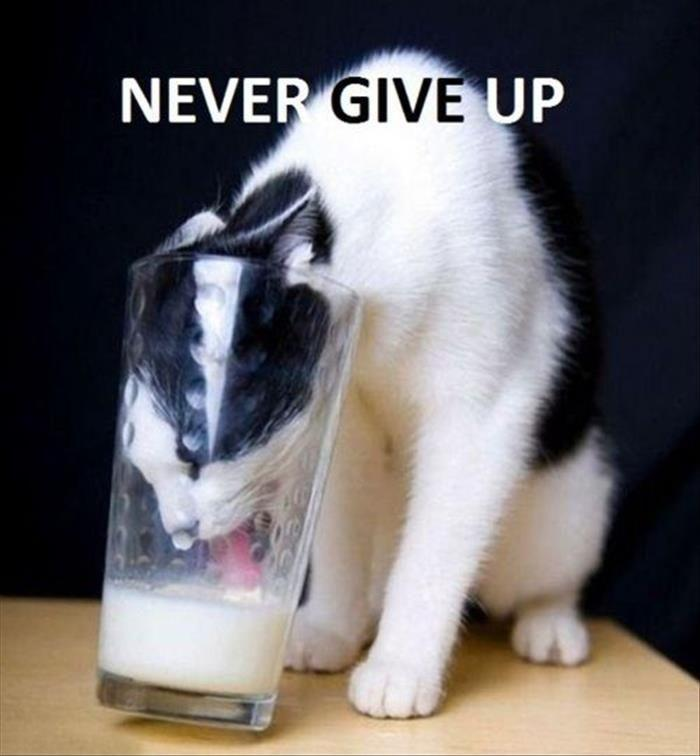 Never give up Picture Quote #4