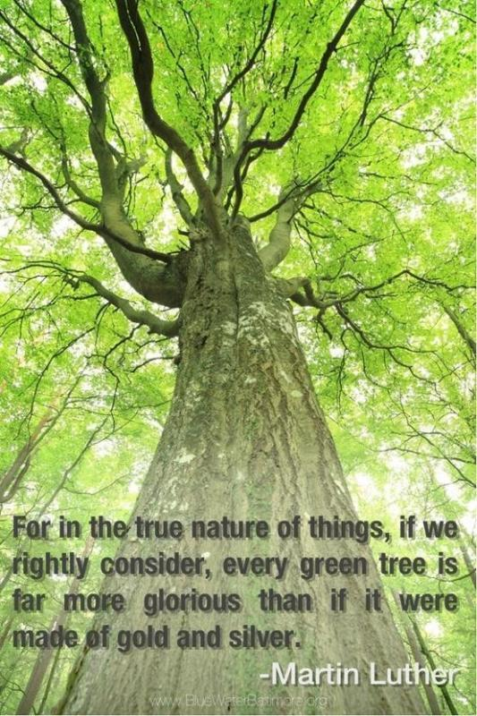 For in the true nature of things, if we rightly consider, every green tree is far more glorious than if it were made of gold and silver Picture Quote #1