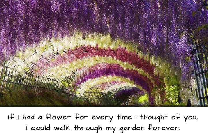 If I had a flower for every time I thought of you, i could walk through my garden forever Picture Quote #1