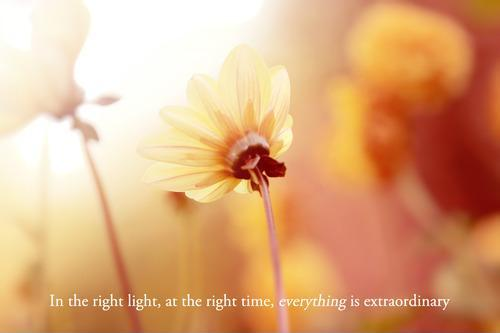 In the right light, at the right time, everything is extraordinary Picture Quote #1