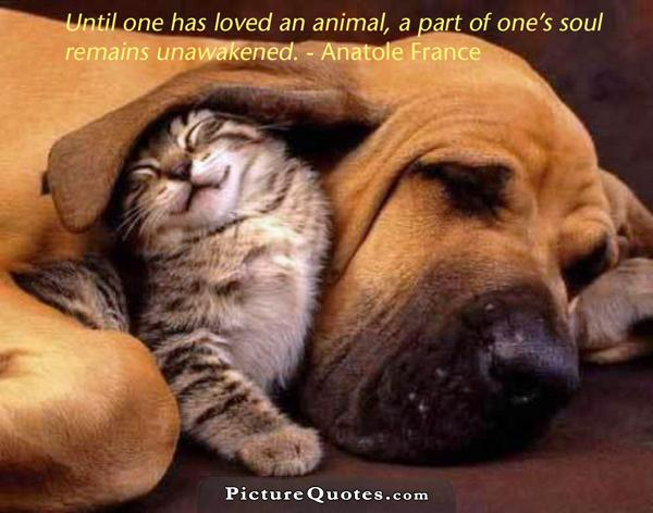 Until one has loved an animal a part of one's soul remains unawakened Picture Quote #1
