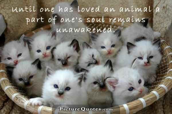 Until one has loved an animal a part of one's soul remains unawakened Picture Quote #3