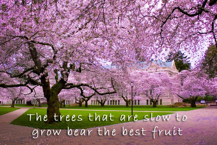 The trees that are slow to grow bear the best fruit Picture Quote #1