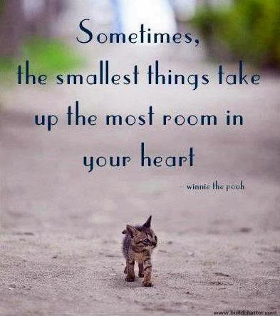 Sometimes the smallest things take up the most room in your heart Picture Quote #2