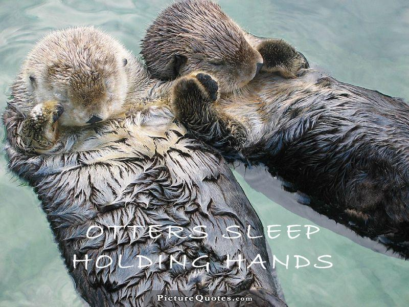 Sea otters sleep holding hands. Picture Quote #1