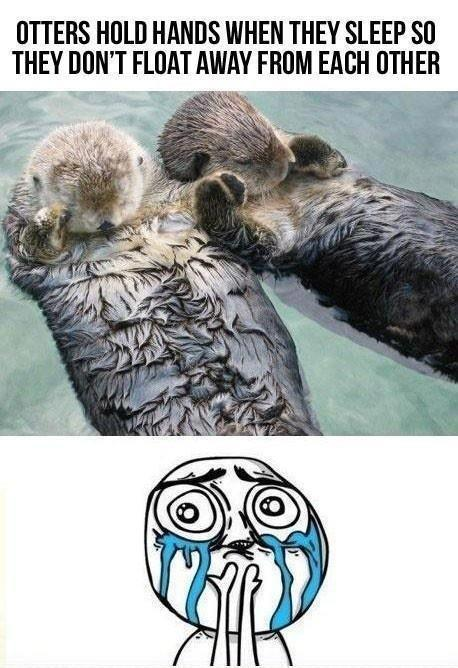 Sea otters sleep holding hands Picture Quote #2