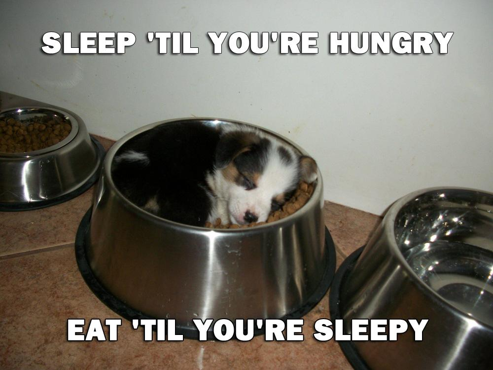 Sleep until you're hungry. Eat until you're sleepy Picture Quote #5