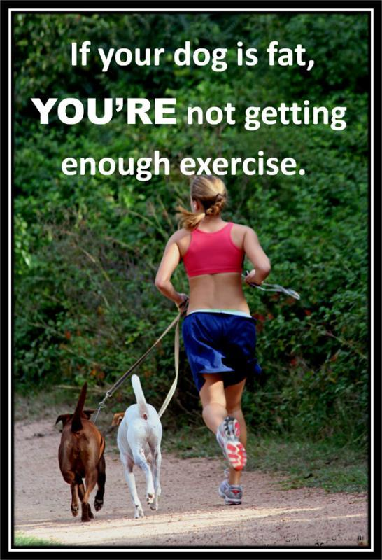 If your dog is fat, you're not getting enough exercise Picture Quote #2