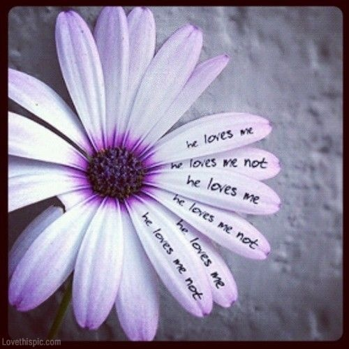 He loves me. he loves me not | Picture Quotes