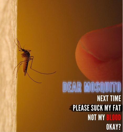 Dear Mosquito, next time suck my fat, not my blood, Ok? Picture Quote #1