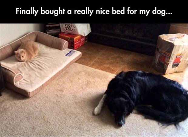 Finally bought a really nice bed for my dog Picture Quote #1