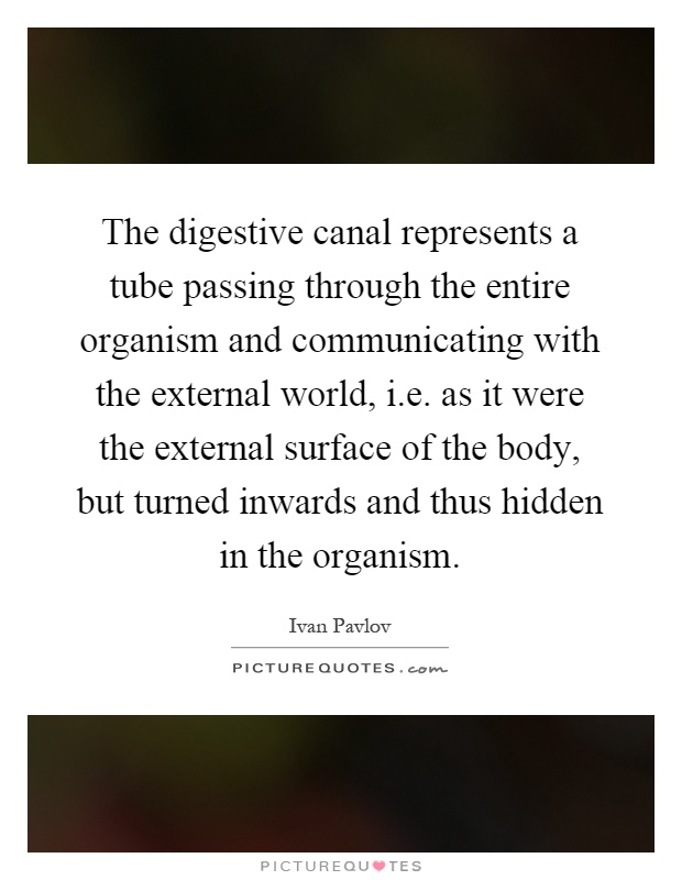 The digestive canal represents a tube passing through the entire organism and communicating with the external world, i.e. as it were the external surface of the body, but turned inwards and thus hidden in the organism Picture Quote #1