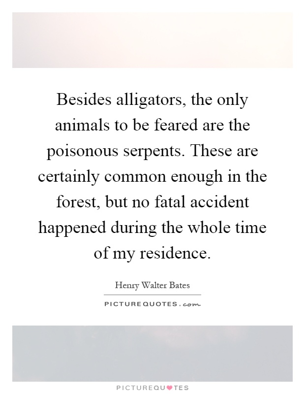 Besides alligators, the only animals to be feared are the poisonous serpents. These are certainly common enough in the forest, but no fatal accident happened during the whole time of my residence Picture Quote #1