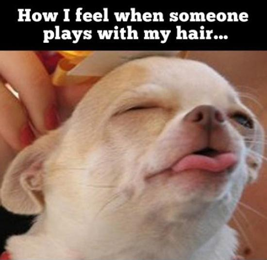 How I feel when someone plays with my hair Picture Quote #1