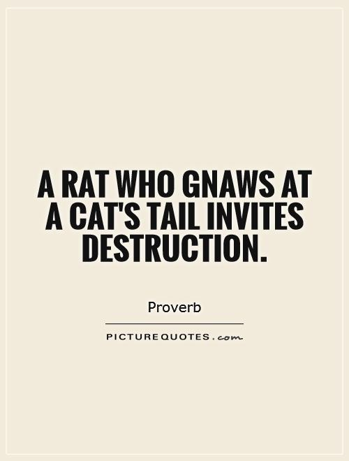 A rat who gnaws at a cat's tail invites destruction Picture Quote #1