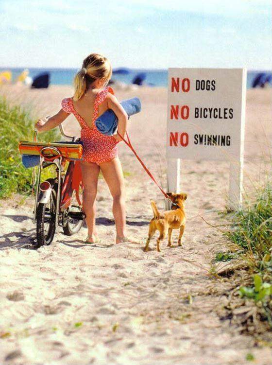 No dogs. No bicycles. No swimming Picture Quote #1