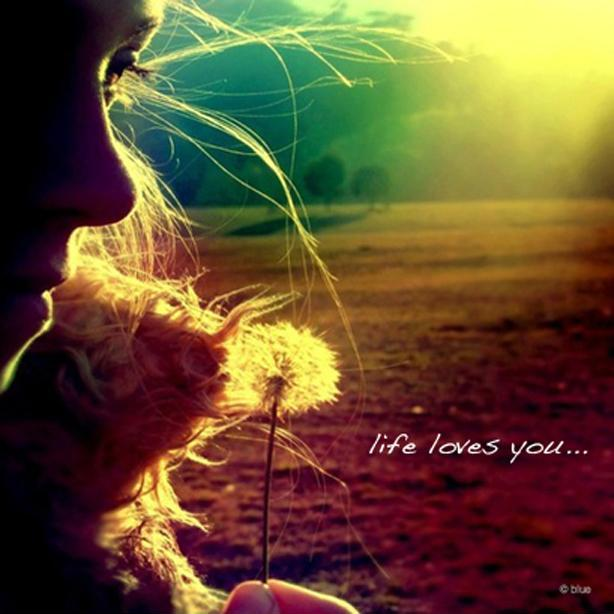 Life loves you Picture Quote #1