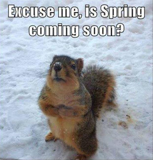 Excuse me, is Spring coming soon? Picture Quote #1