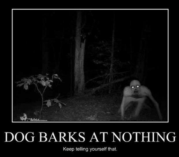 Dog barks at nothing. Keep telling yourself that Picture Quote #1