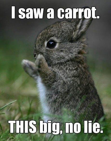 I saw a carrot. THIS big, no lie Picture Quote #1