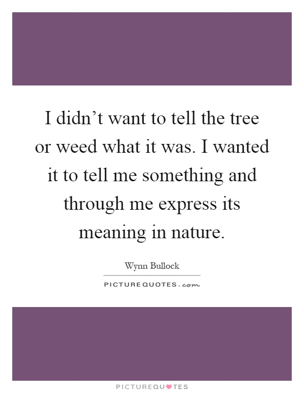 I didn't want to tell the tree or weed what it was. I wanted it to tell me something and through me express its meaning in nature Picture Quote #1