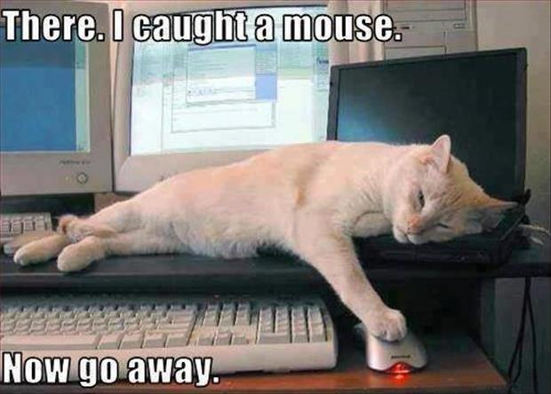 There. I caught a mouse. Now go away Picture Quote #1