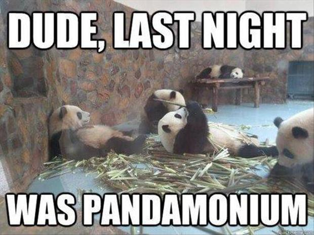 Dude, last night was pandamonium Picture Quote #1