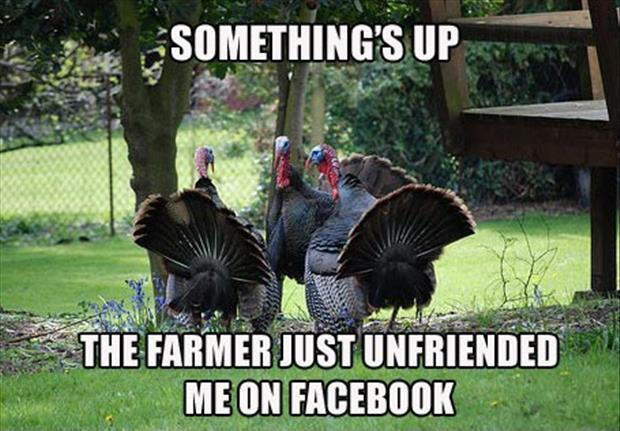 Something's up. The farmer just unfriended me on Facebook Picture Quote #1