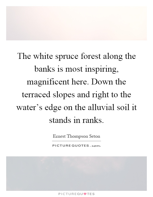 The white spruce forest along the banks is most inspiring, magnificent here. Down the terraced slopes and right to the water's edge on the alluvial soil it stands in ranks Picture Quote #1