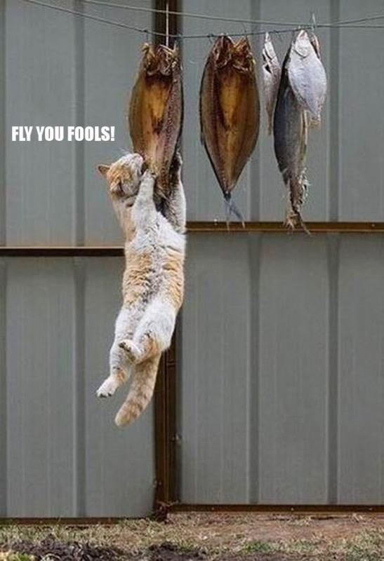 Fly you fools! Picture Quote #1