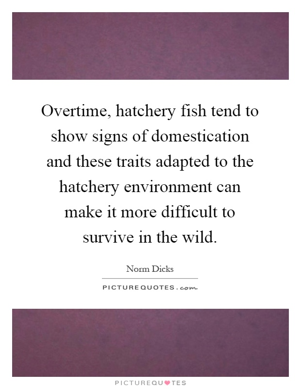 Overtime, hatchery fish tend to show signs of domestication and these traits adapted to the hatchery environment can make it more difficult to survive in the wild Picture Quote #1