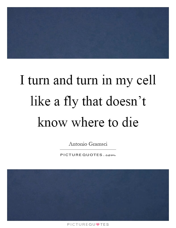 I turn and turn in my cell like a fly that doesn't know where to die Picture Quote #1