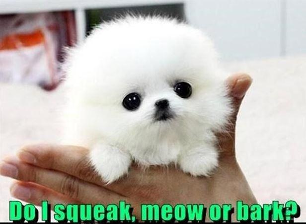 Do I squeak, meow or bark? Picture Quote #1