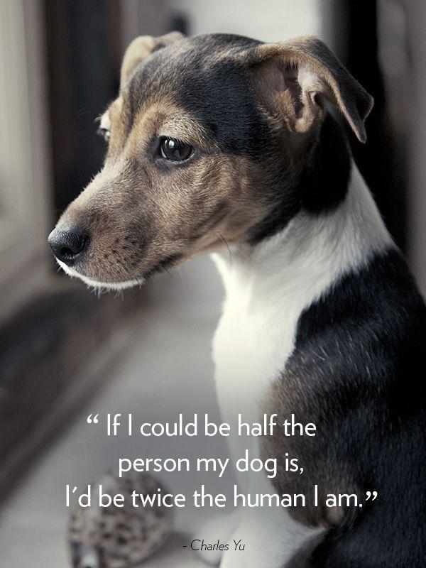 If I could be half the person my dog is, I'd be twice the human I am Picture Quote #1