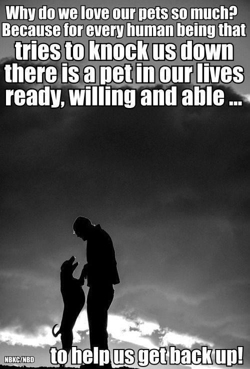 Why do we love our pets so much? Because for every human being that tries to knock us down there is a pet in our lives ready, willing and able, to help us get back up Picture Quote #1