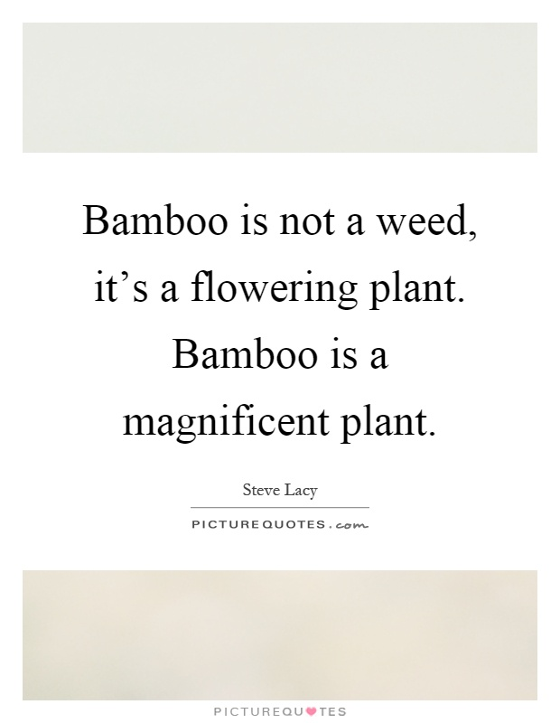 Bamboo is not a weed, it's a flowering plant. Bamboo is a magnificent plant Picture Quote #1