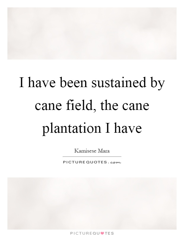 I have been sustained by cane field, the cane plantation I have Picture Quote #1