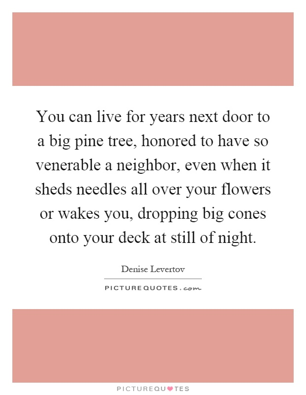You can live for years next door to a big pine tree, honored to have so venerable a neighbor, even when it sheds needles all over your flowers or wakes you, dropping big cones onto your deck at still of night Picture Quote #1