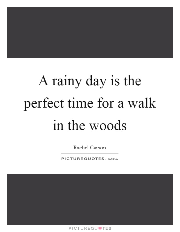 A rainy day is the perfect time for a walk in the woods Picture Quote #1