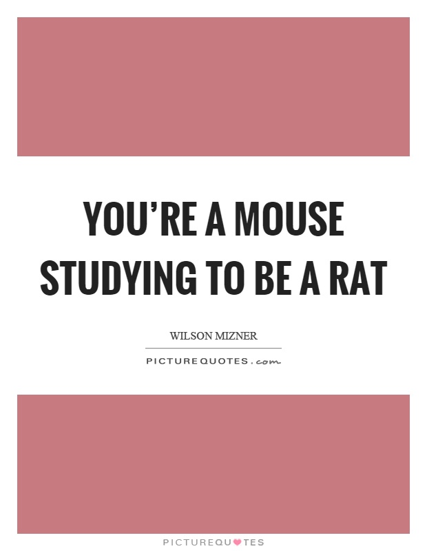 You're a mouse studying to be a rat Picture Quote #1