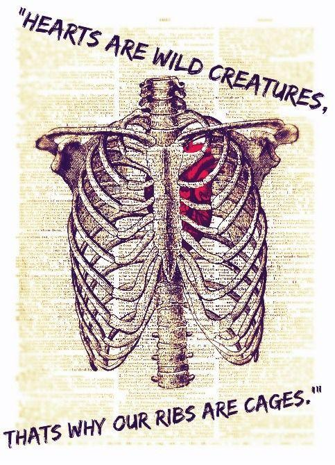 Hearts are wild creatures, that's why our ribs are cages Picture Quote #1