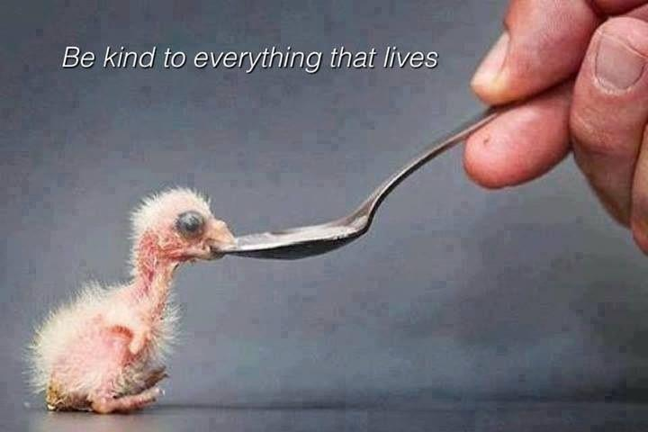 Be kind to everything that lives Picture Quote #2
