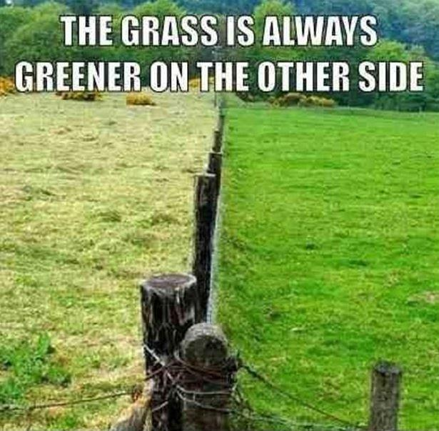 The grass is always greener on the other side Picture Quote #2