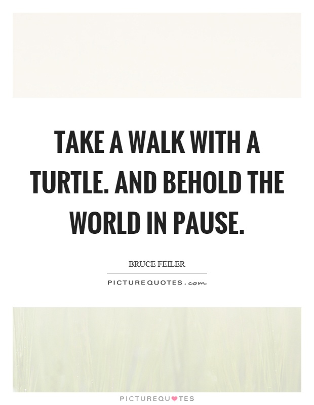 Take a walk with a turtle. And behold the world in pause Picture Quote #1