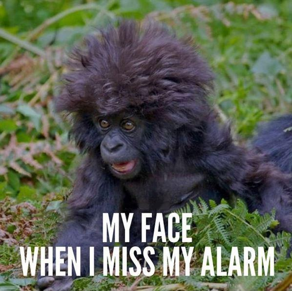 My face when I miss my alarm Picture Quote #1