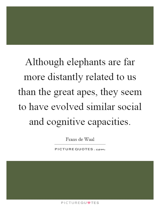 Although elephants are far more distantly related to us than the great apes, they seem to have evolved similar social and cognitive capacities Picture Quote #1