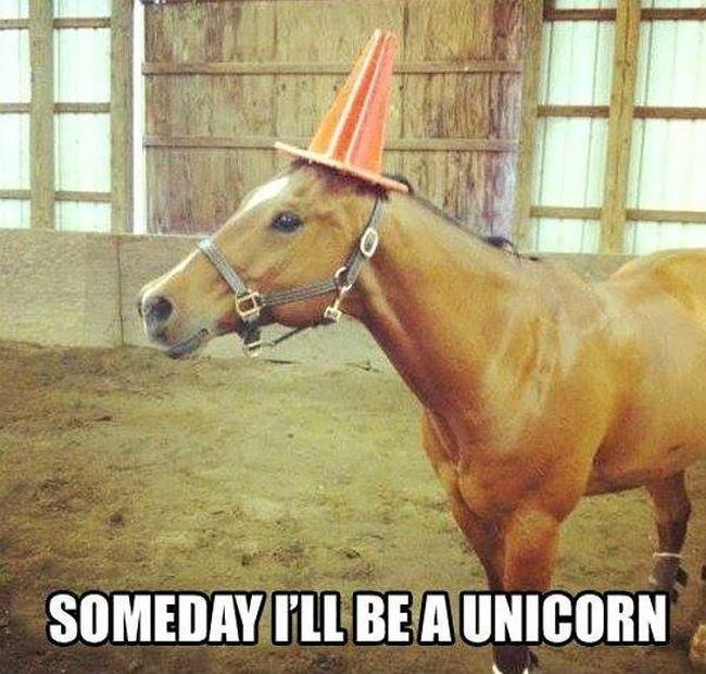 Someday I'll be a unicorn Picture Quote #1