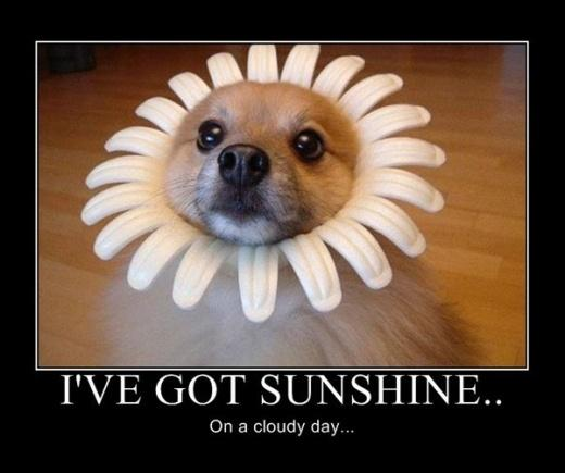 I've got sunshine on a cloudy day Picture Quote #2